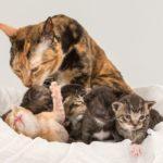 котята уральские рексы