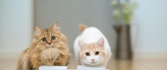 кот и кошка пьет молоко