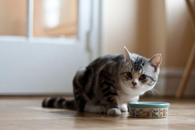 кот и миска с едой