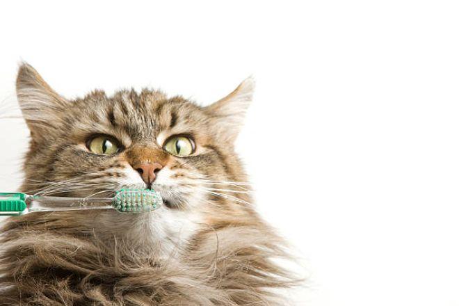 Мейн кун чистка зубов
