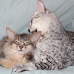 мама и котенок