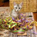 Котенок египетский мау