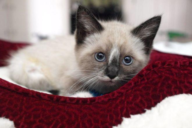 У кого какие клички для кошек thumbnail