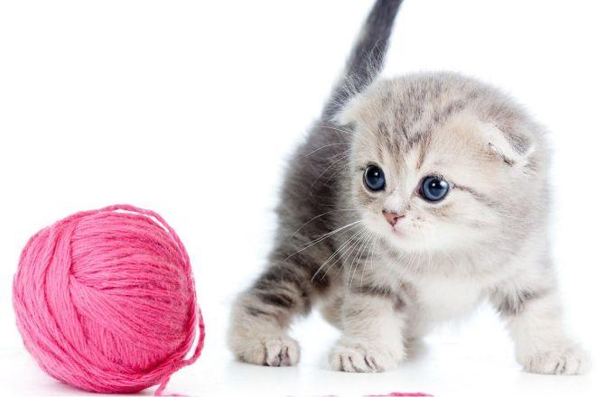 котенок и клубок ниток