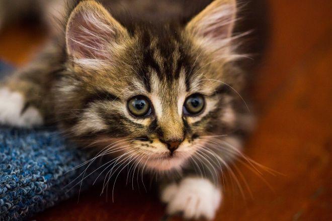 Котенок отзывается на имя