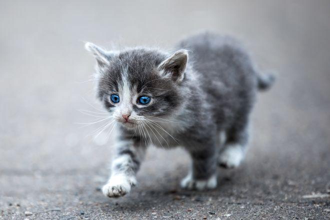 котенок идет