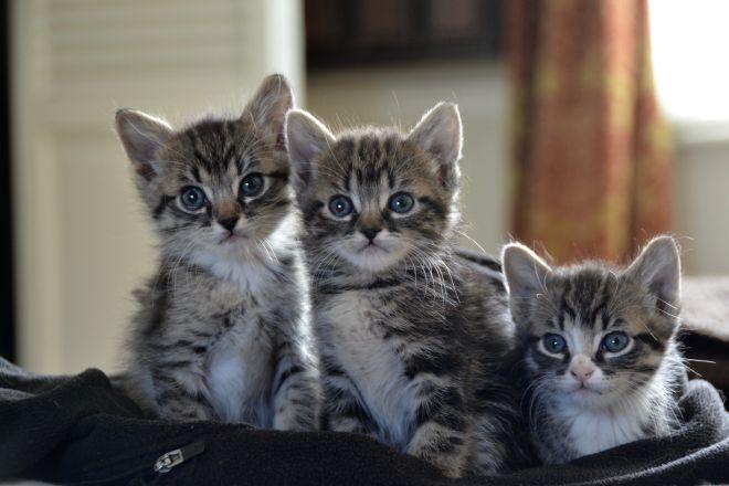 маленькие котята мальчики