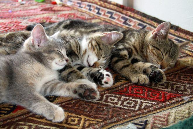 котята отдыхают