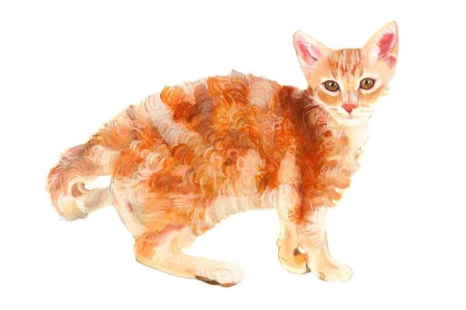 Рисунок кошки лаперм