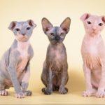 3 кошки