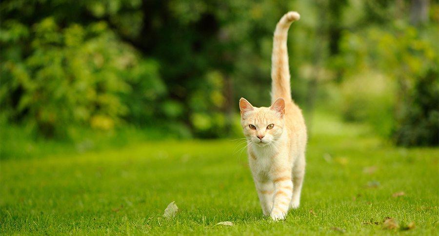 Почему кошки дергают и виляют хвостом – как определить настроение питомца