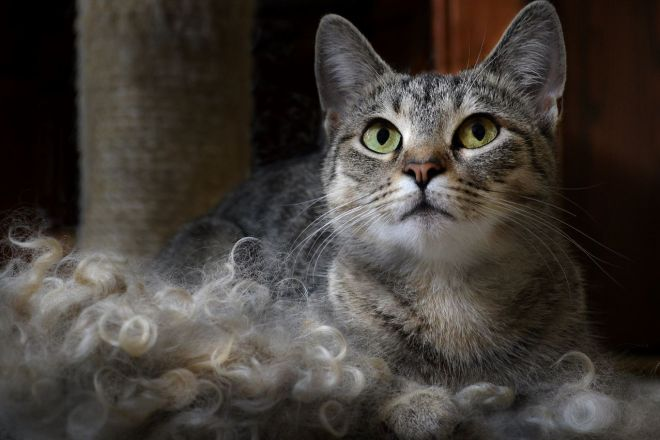Шерсть и кошка