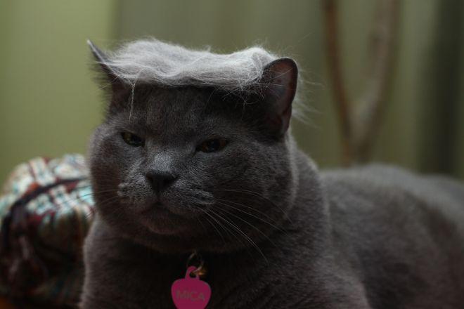 кот и шерсть