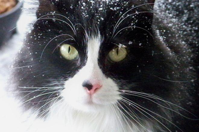 кот зимой