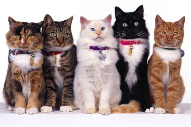 Разные кошки